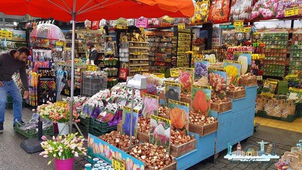 Amsterdam Bloemenmarkt Çiçek Pazarı